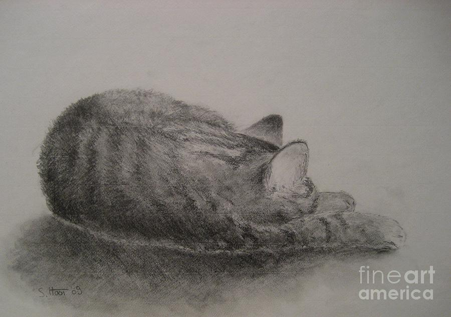 Cat Drawing - The Cat Series II by Sabina Haas