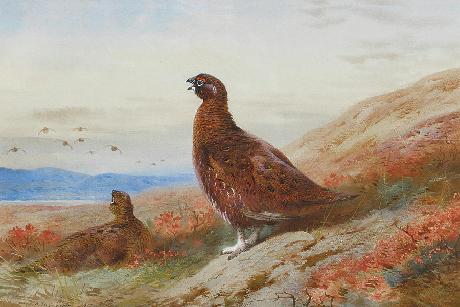 Painter Mixed Media - The Challenge By Thorburn by Archibald Thorburn