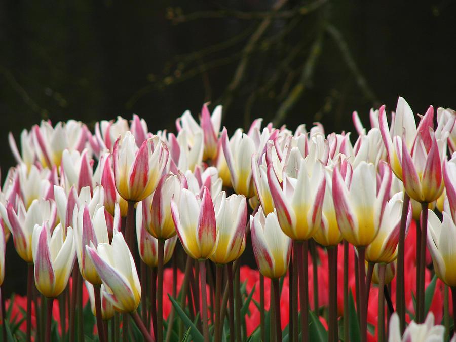 The Charming Garden by Renata Vincoletto