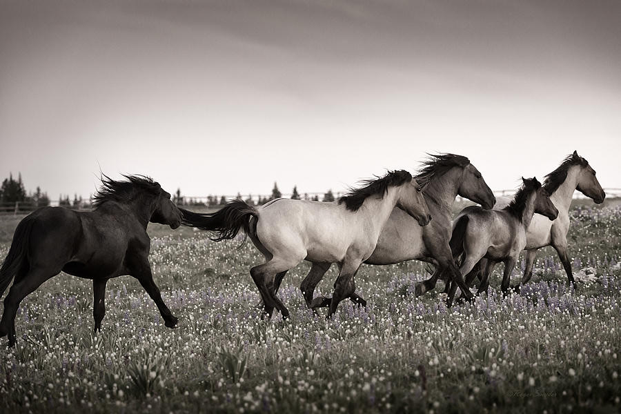 Wild Horses Photograph - The Chase 1 Copper by Roger Snyder