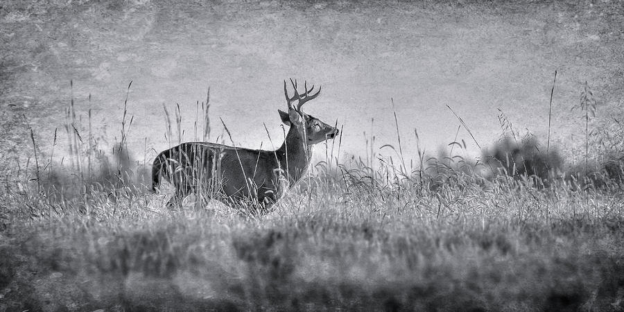 Whitetail Deer Photograph - The Chase by Garett Gabriel
