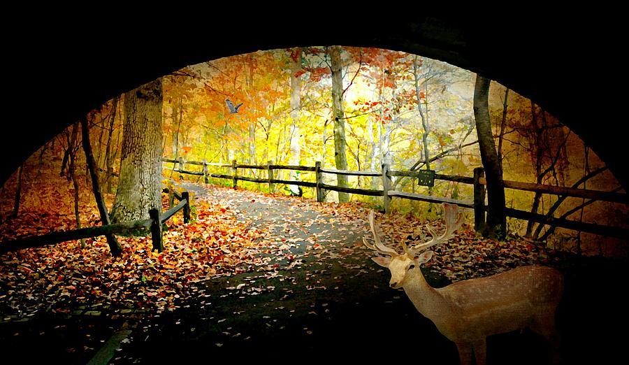 Autumn Landscape Photograph - Under The Cobble Stone Bridge by Diana Angstadt
