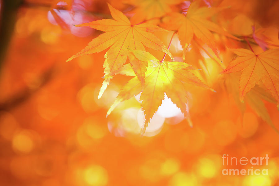 Fall Photograph - The Color of Sunshine by Lisa McStamp