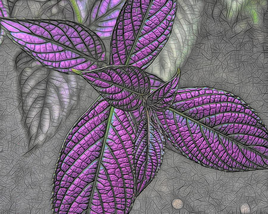 Digital Design Digital Art - The Color Purple by Heidi Fickinger