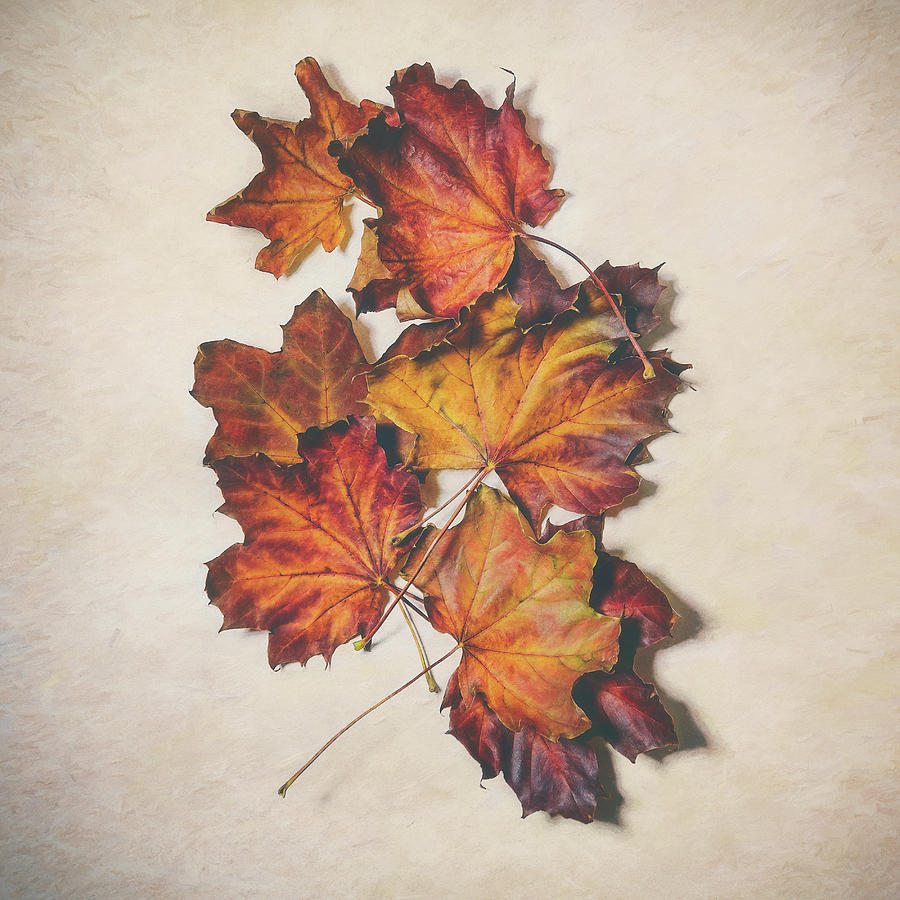 Leaves Photograph - The Colors of Fall by Scott Norris