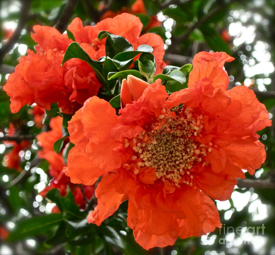 Orange Flower Photograph - The Colour Orange by Gwyn Newcombe