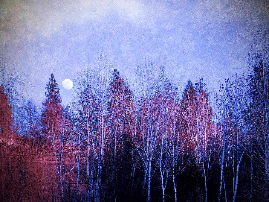 Moon Photograph - The Colours Of The Moon by Tara Turner