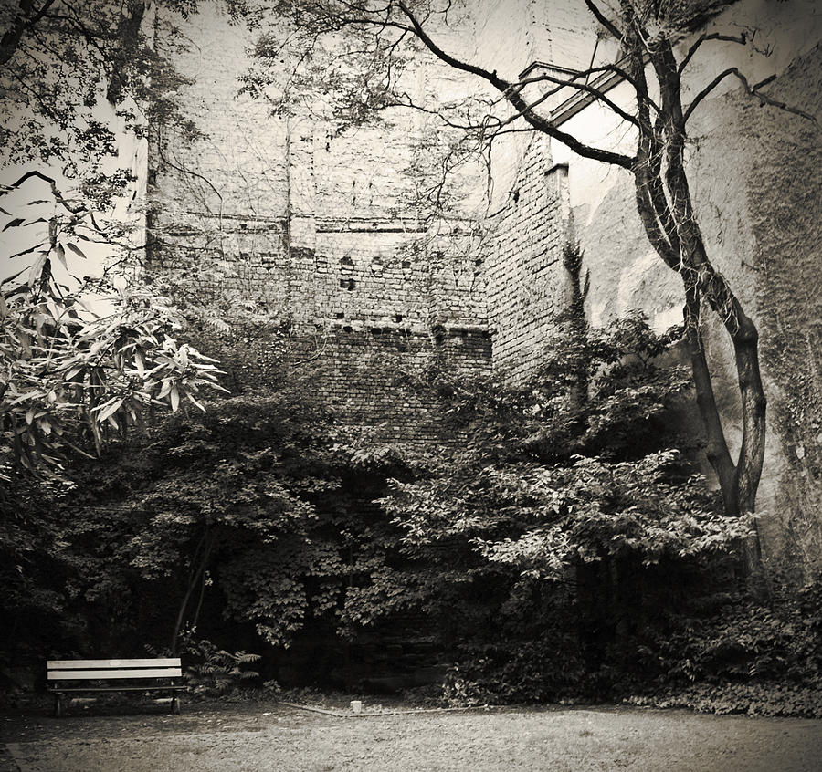 Tree Photograph - The Courtyard by Dorit Fuhg