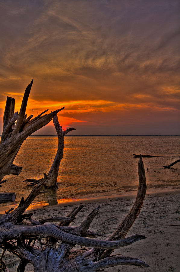 Jekyll Island Photograph - The Cradle Of Life by Jason Blalock