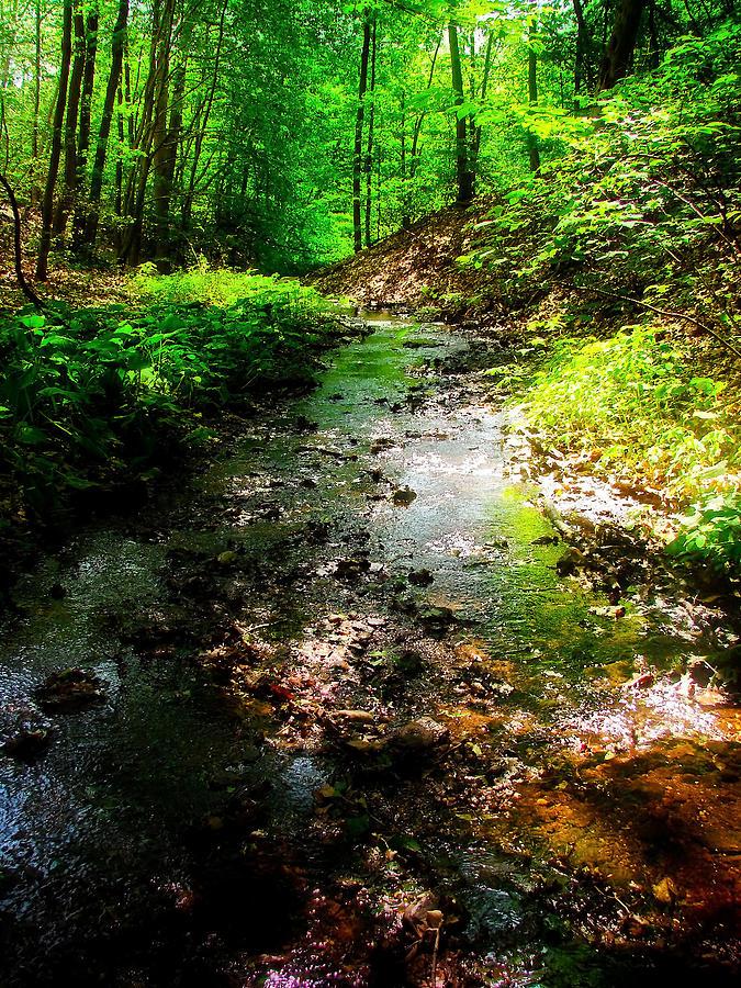 Creek Photograph - The Creek by Jonathan Swindle