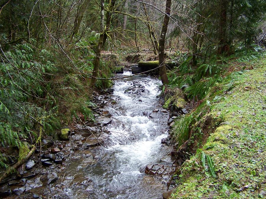Digital Photography Photograph - The Creek by Laurie Kidd