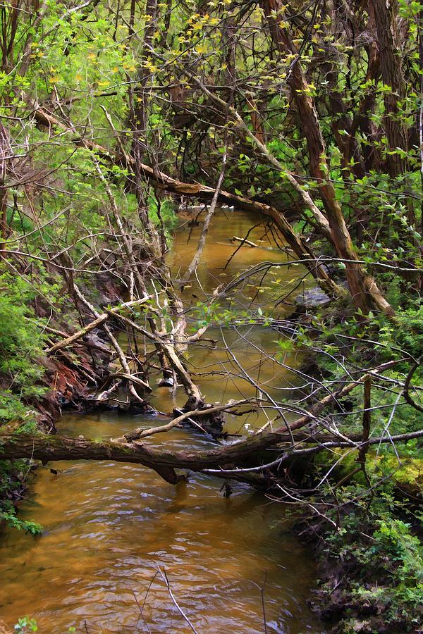 Creek Photograph - The Creek by Lyle Hatch