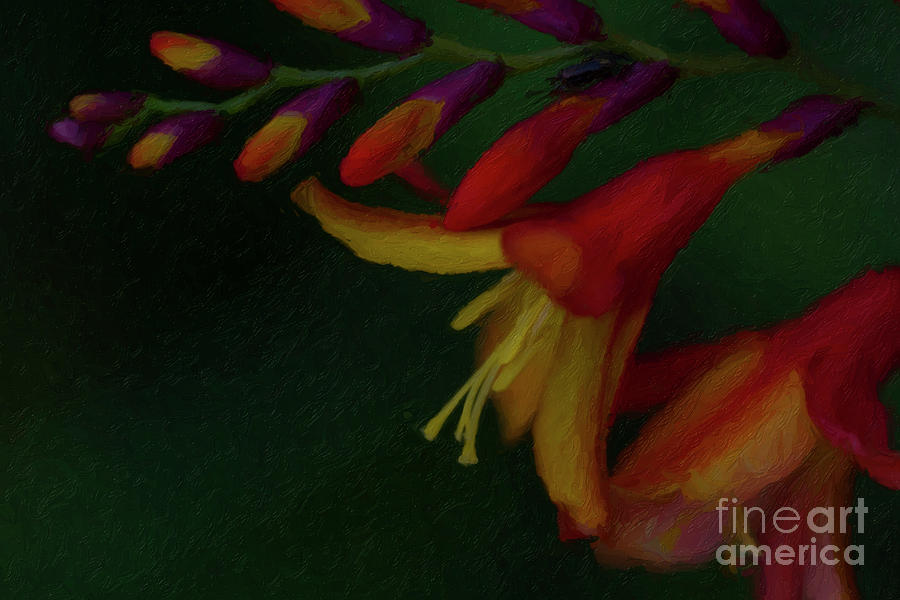 Flower Painting - The Crocosmia Doth Bloom by C L Lassila