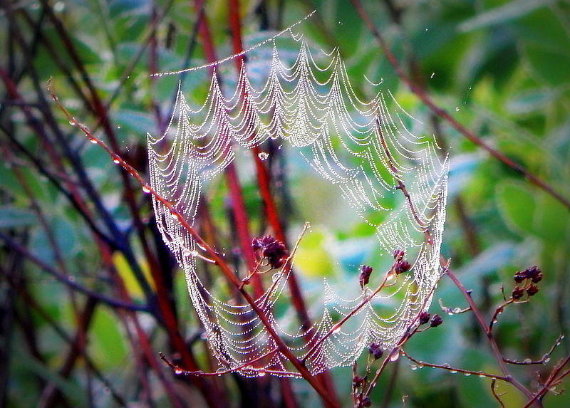 Spider Photograph - The Crown by Karen Cook