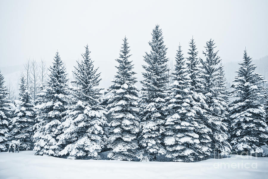 The Crown Of Winter Photograph