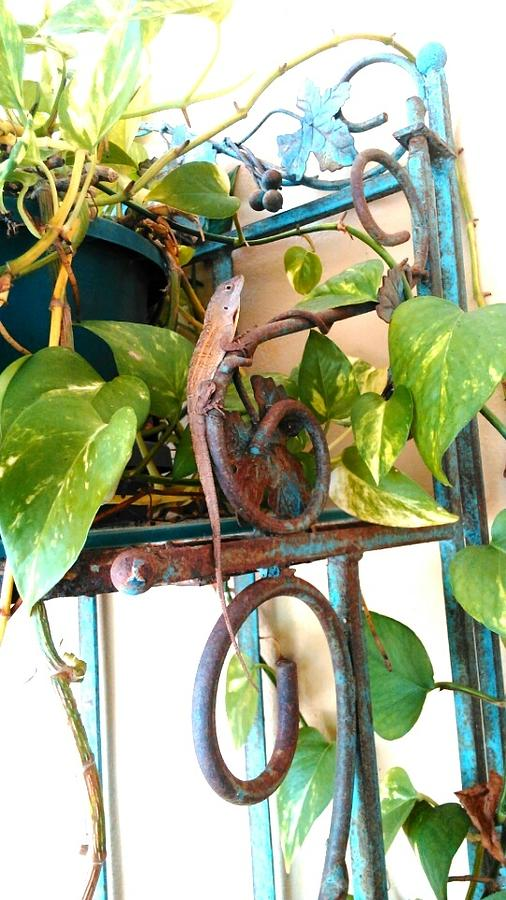 Lizards Photograph - The Cuban Anoles Plant Promenade by Andrew Blitman