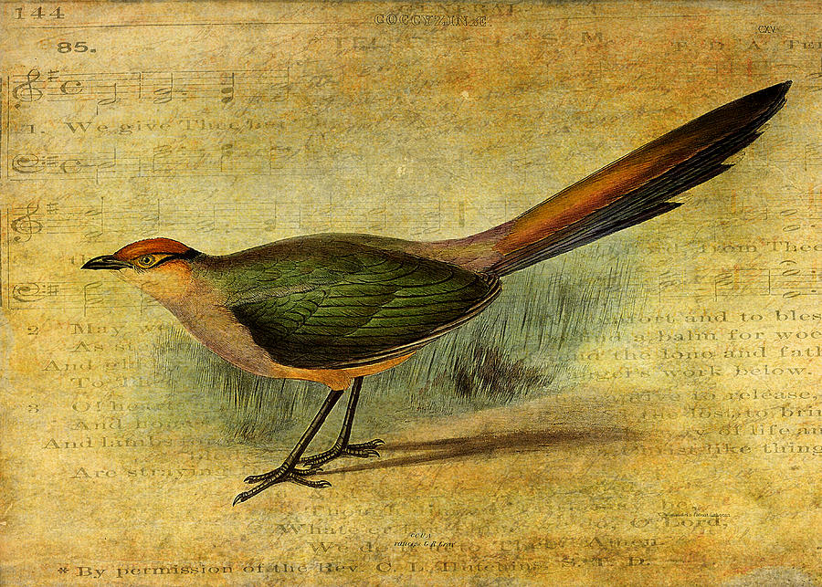 Bird Digital Art - The Cuckoos Note by Sarah Vernon