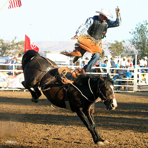 Rodeo Photograph - The Dance.. by Carol Miller