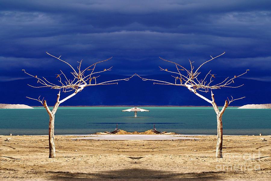Dancing Photograph - The Dancing Trees  02 by Arik Baltinester