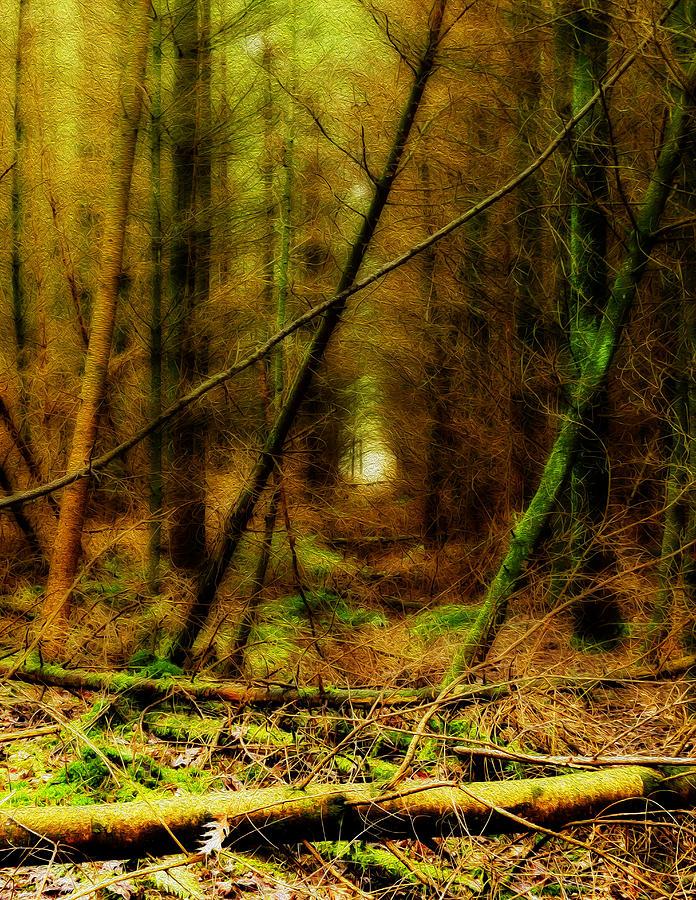 Forest Photograph - The dark forest by Joost Lagerweij