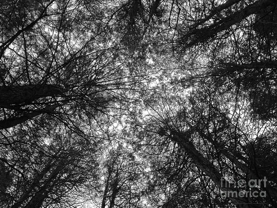 Black And White Photograph - The Dark Forest Path by Katrina Perekrestenko