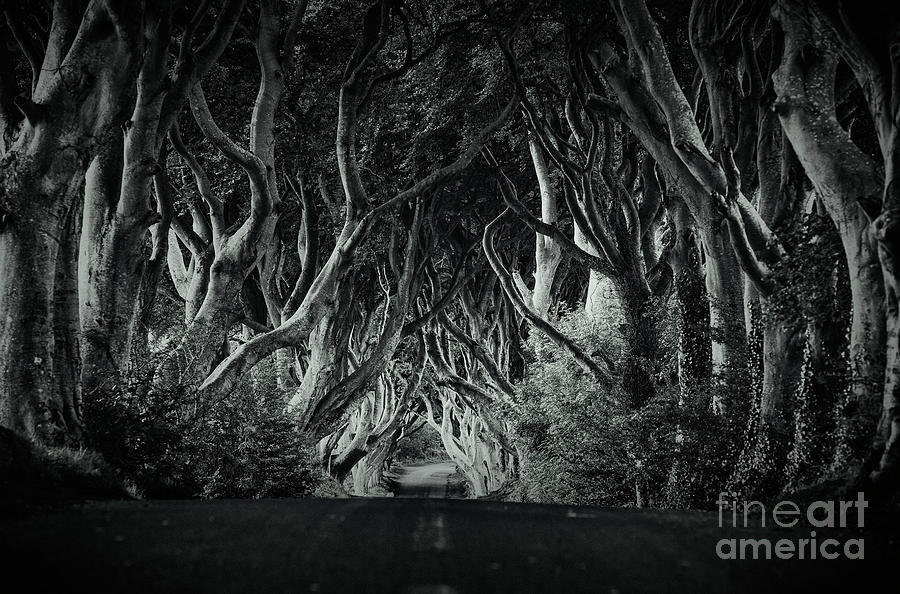The Dark Hedges by David Lichtneker