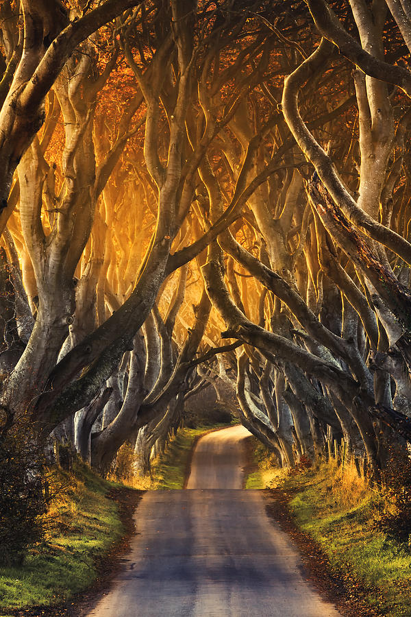 Dark Hedges Photograph - The Dark Hedges IIi by Pawel Klarecki