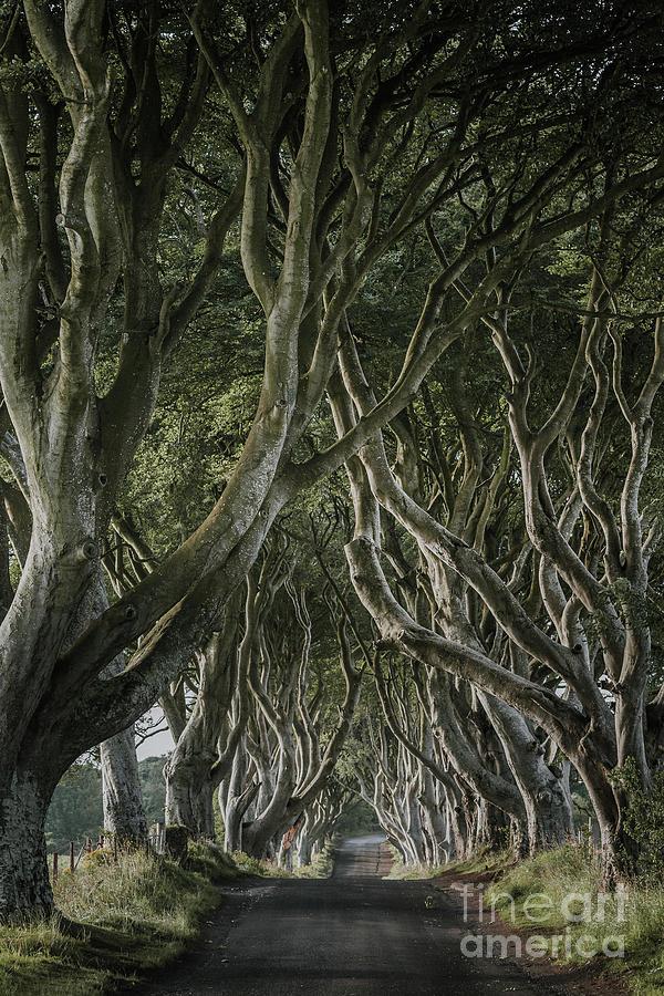 Game Of Thrones Photograph - The Dark Hedges V by Pawel Klarecki