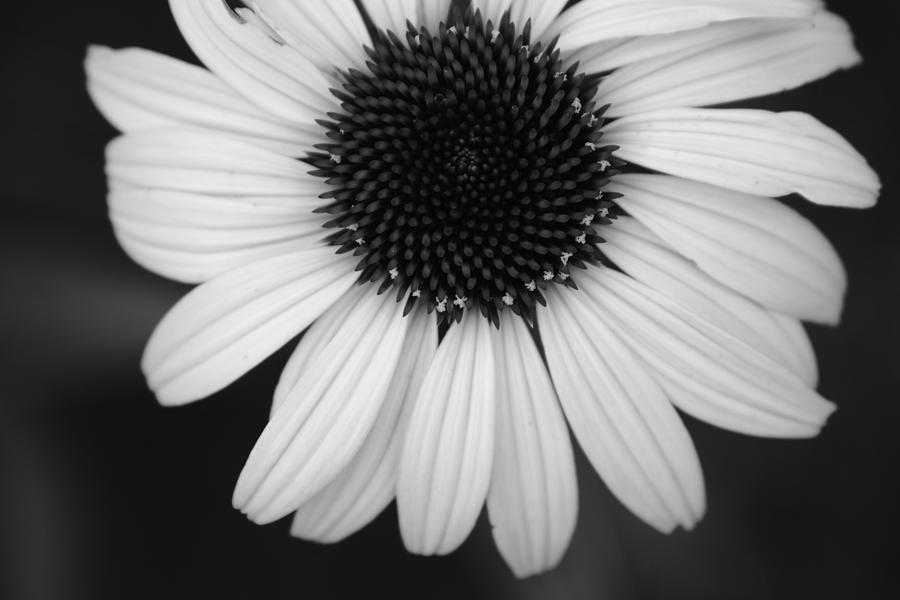 Flower Photograph - The Dark In The Light by Jessica Myscofski
