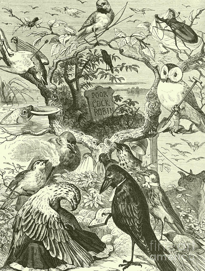 Engraving Drawing - The Death And Burial Of Cock Robin by English School