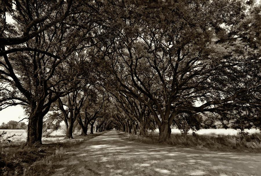 Evergreen Plantation Photograph - The Deep South Bw by Steve Harrington