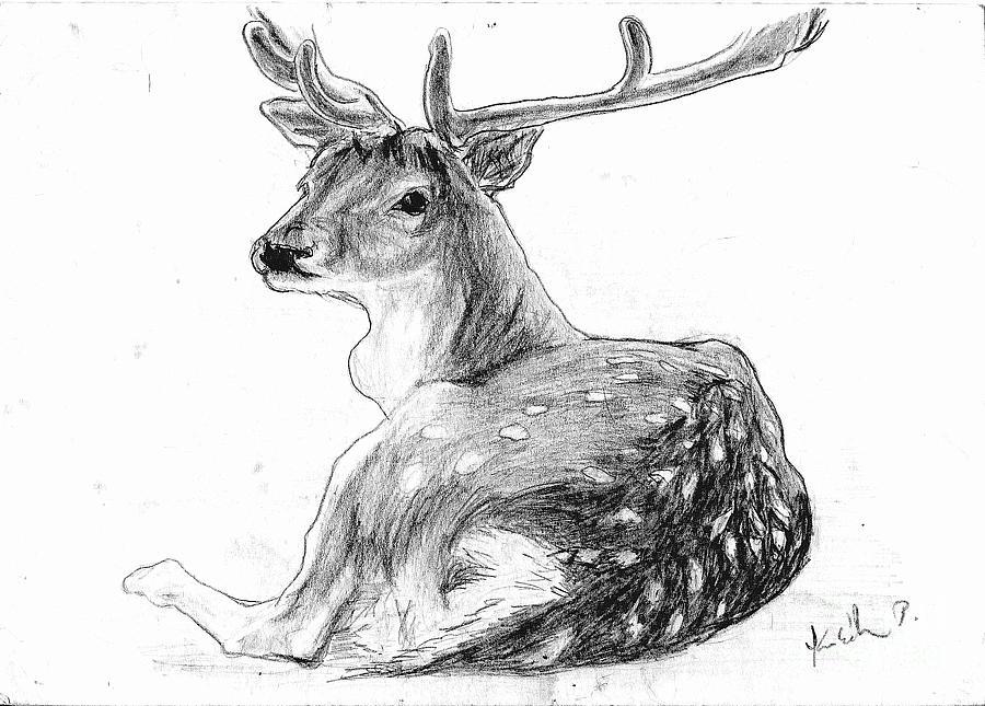 the deer drawing by peter kulik