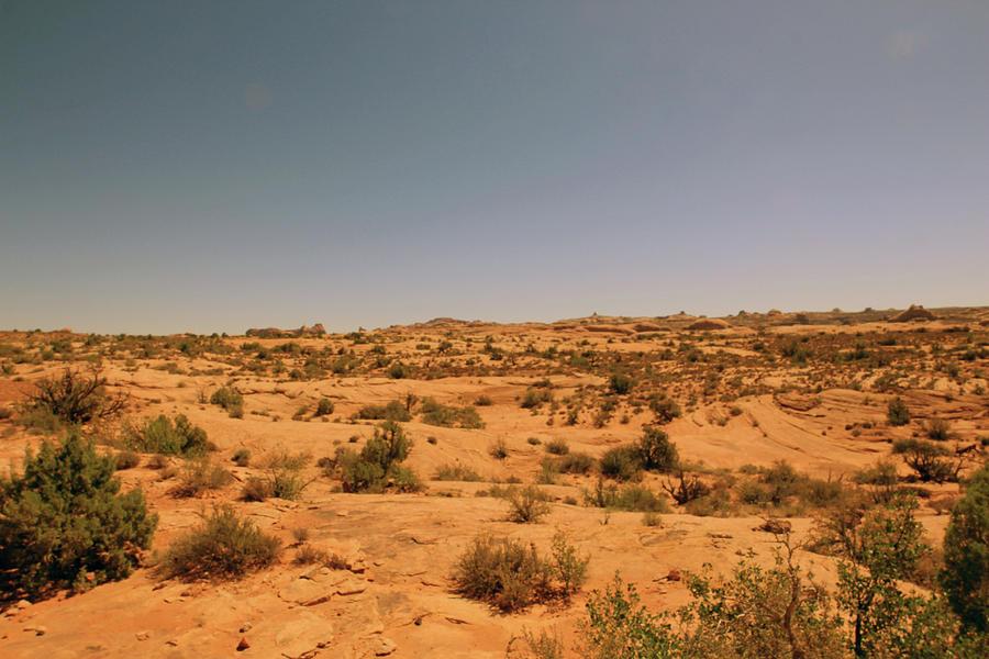 The Desert by Jodi Vetter