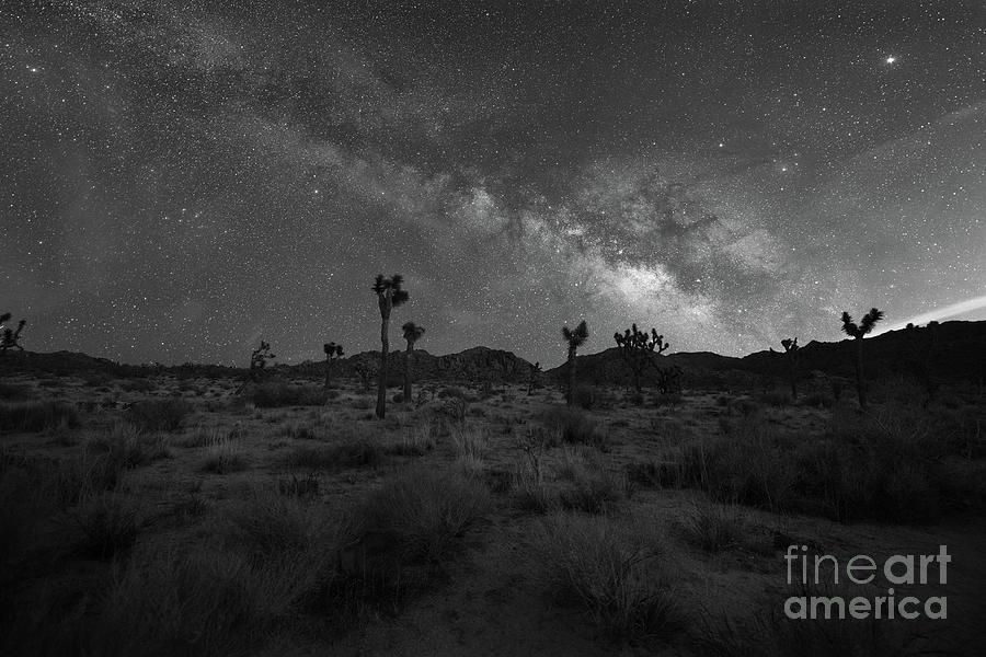 The Desert Night Bw Photograph