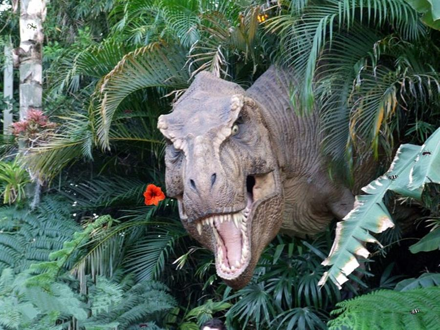 Dinosaur Photograph - The Dinosaurs Lunch by Rana Adamchick