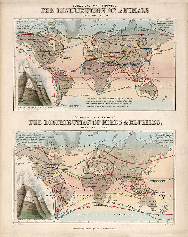 The Distribution Of Animals, Birds And Reptiles - Zoological Map - Historical Map Drawing