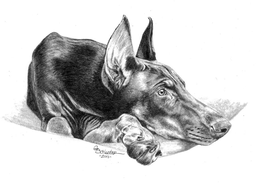 Dog Ear Drawings