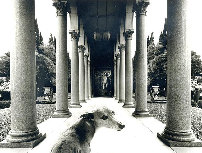 The Dog Photograph by Itzhak Ben-Arieh