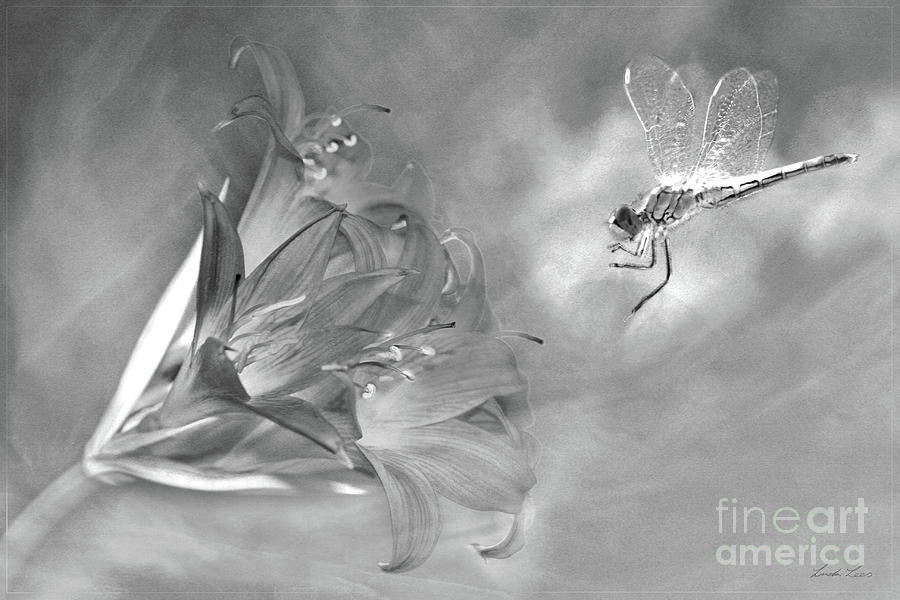 Lily Photograph - The Dragonfly And The Flower by Linda Lees