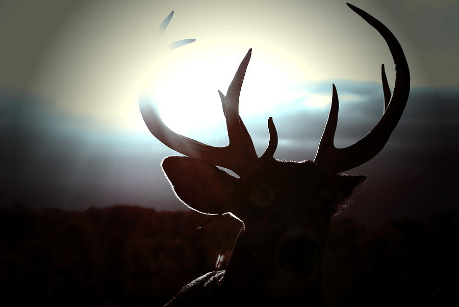 Whitetail Buck Photograph - The Dream by Emily Stauring