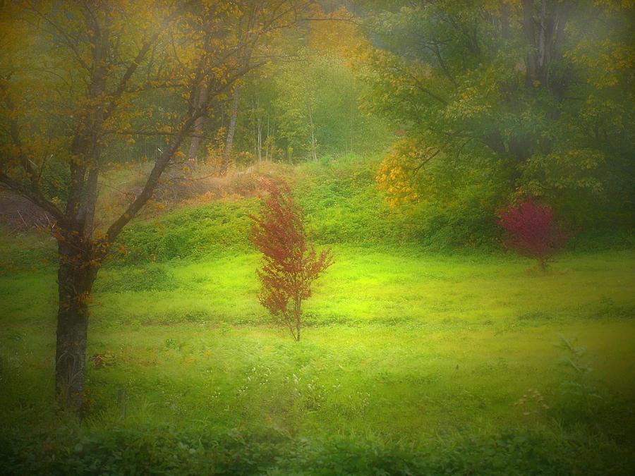 Gree Photograph - The Dream Field by Tara Turner