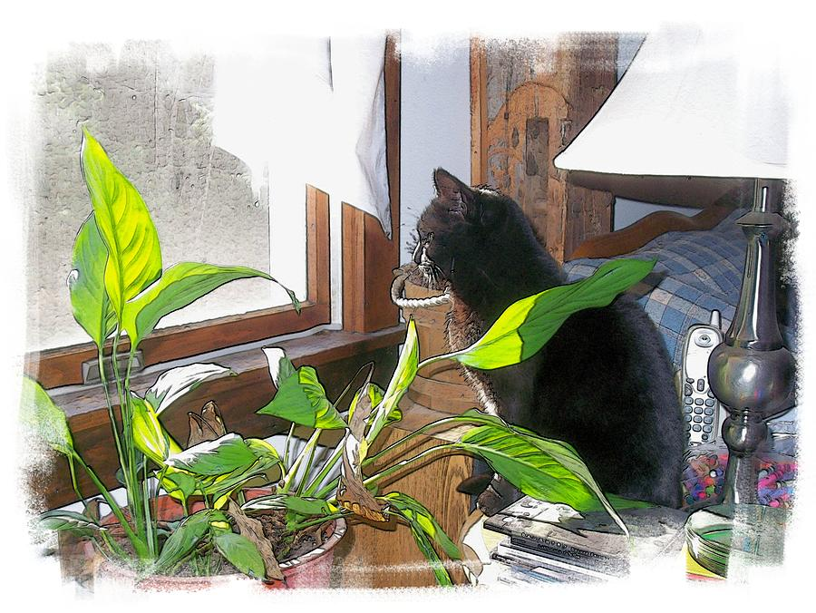 Black Cat Photograph - The Dreamer by Rose Guay