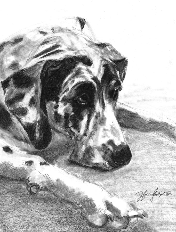 Great Dane Drawing - The Duke by J Ferwerda