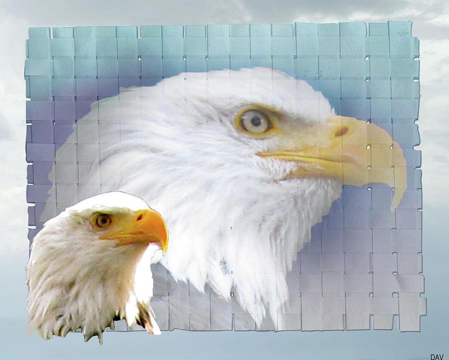Animal Photograph - The Eagles Focus by Debra     Vatalaro