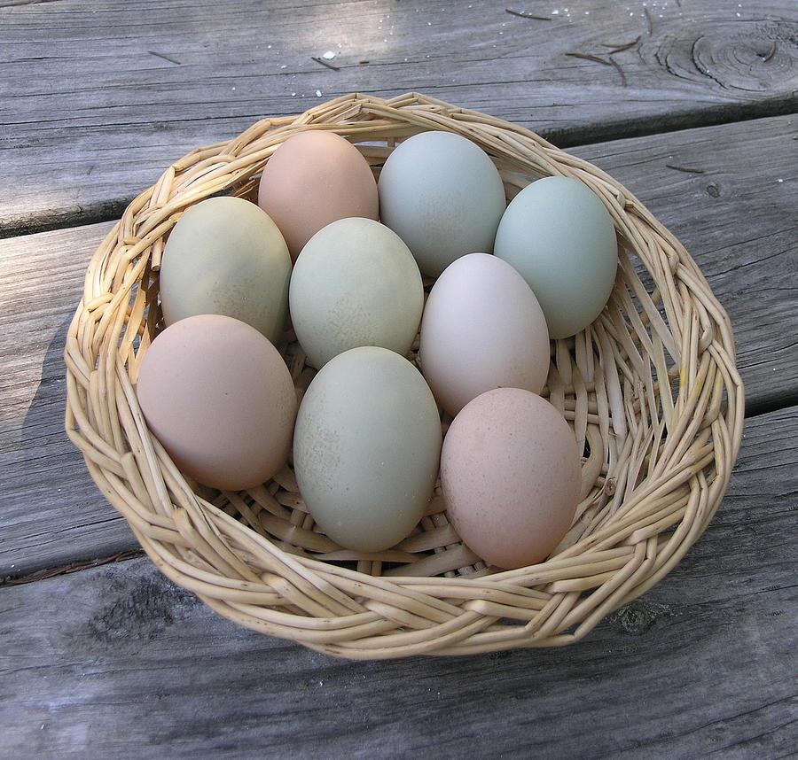 Farm Photograph - The Eggs by Janis Beauchamp