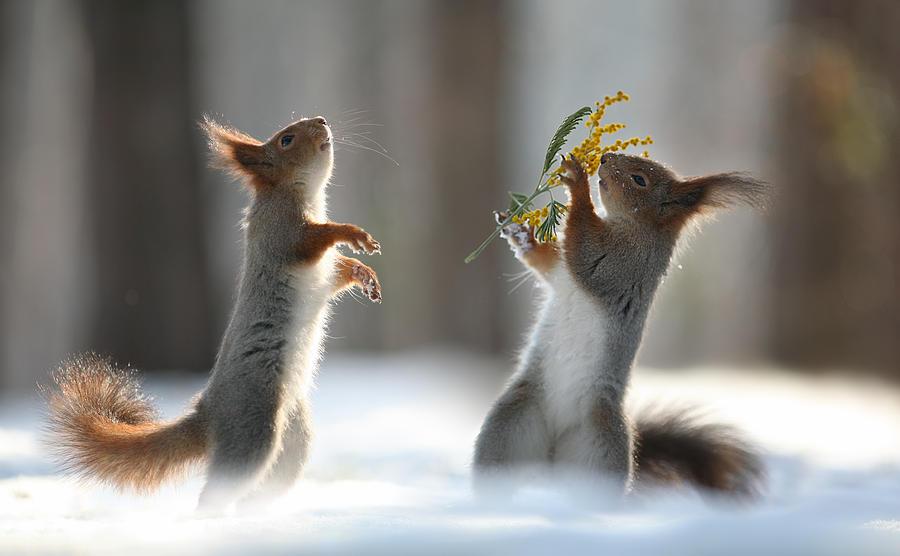 клуб соло весенние танцы животных картинки калашников