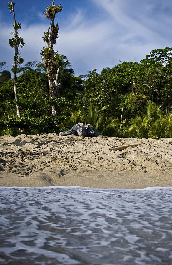 Leatherback Turtle Photograph - The Elements Of Life by Sarita Rampersad