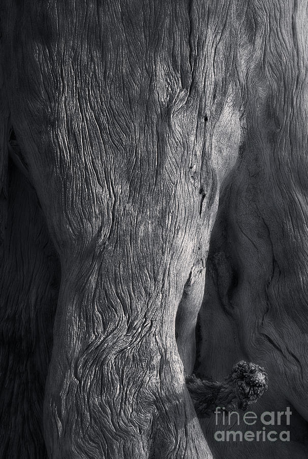 Landscape Photograph - The Elephant Tree by Royce Howland