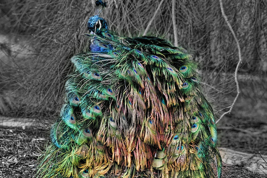Colorful Photograph - The Emperors Clothes by Douglas Barnard