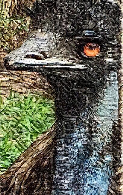The Emu  by Kimberly Woyak